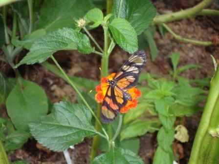 Foto: Borboletário Flores que Voam