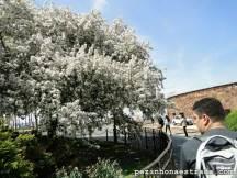 NY na primavera