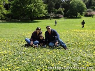 Golden Gate Park e o gramado repleto de mini margaridas