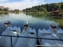 Lago com pedalinhos