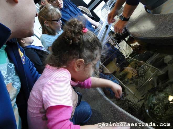 Nessa parte do aquário, é possível tocar em algumas espécies