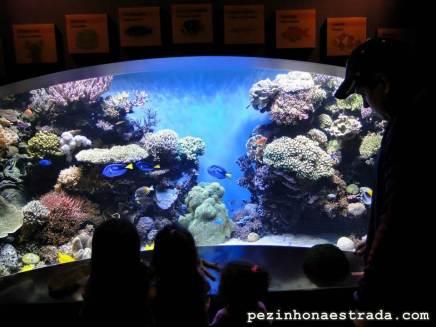 Olha a Dory!!! - Monterey Bay Aquarium