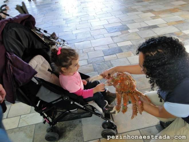 """Bela """"recebe explicações"""" sobre essa espécie de caranguejo, no Monterey Bay Aquarium. É uma pena ela ainda não entender inglês. rsrsrsrsrs"""