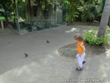 É comum encontrar alguns animais soltos pelo zoológico