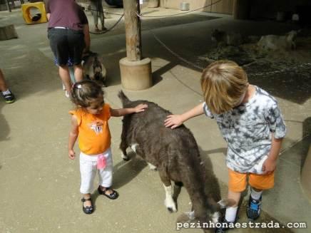 San Diego Zoo - interação com animais de fazenda