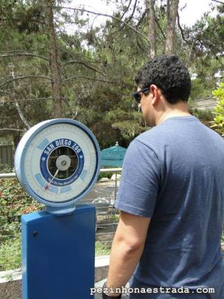 """Quanto você pesa na escala """"urso polar""""?"""