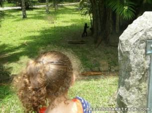 Macaco prego no Jardim Botânico