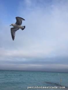 As gaivotas fazem a festa em frente ao apartamento